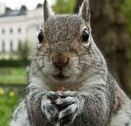Excited squirrel