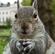 Impressed squirrel