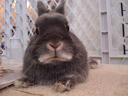 Disapproving bunny - closely related tothe Bunny of Shame.