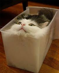 What? It's the perfect fit!