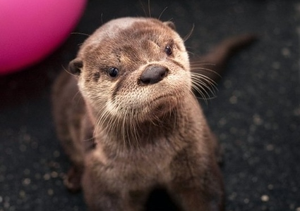 "I was ""otterly"" disappointed …. geddit?"