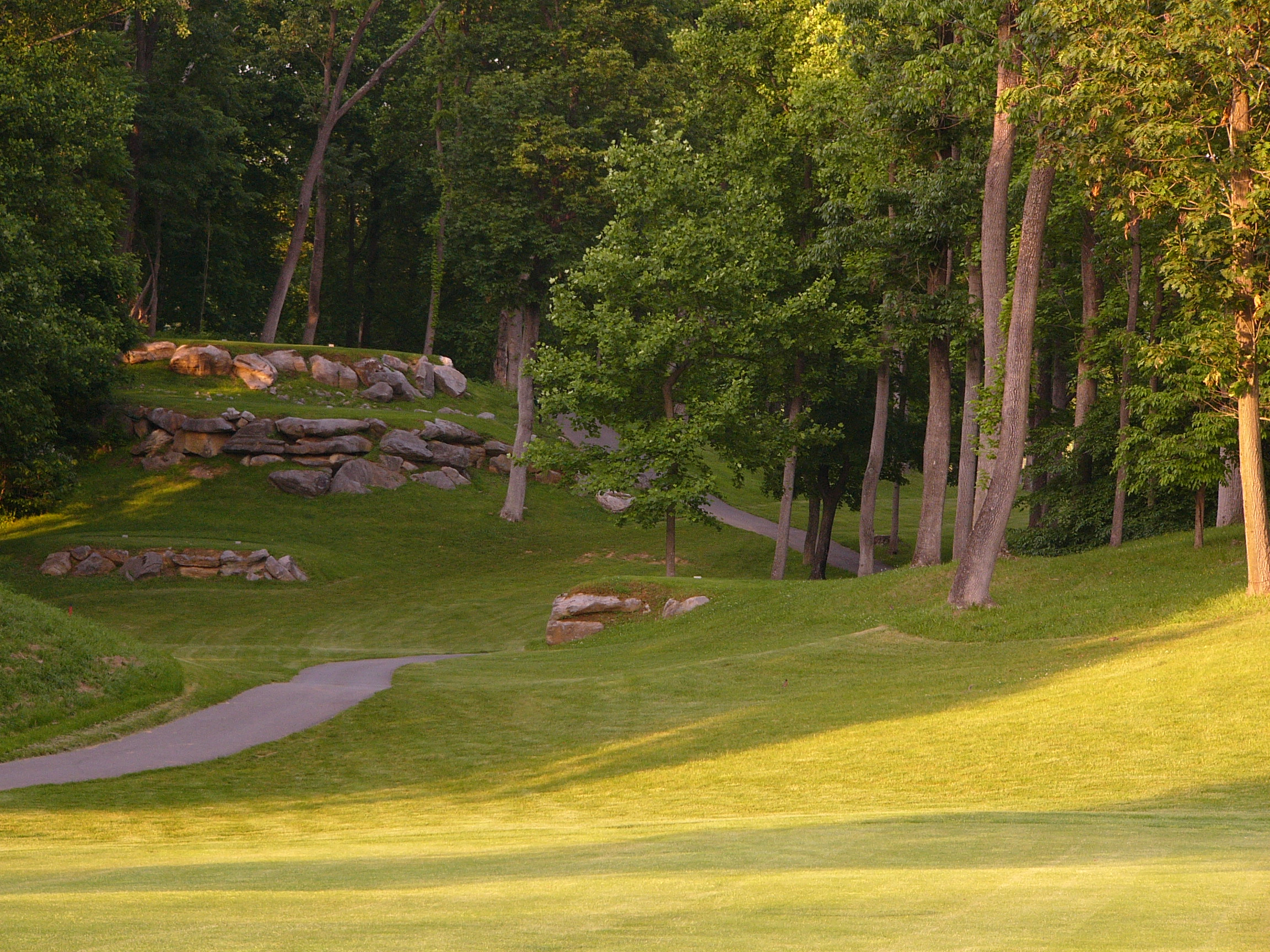 Wooded Tee Boxes on Hole #5
