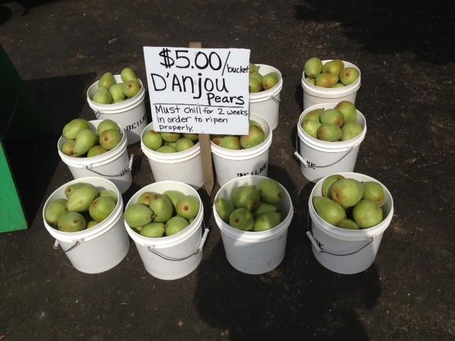 D-2527Anjou-pears