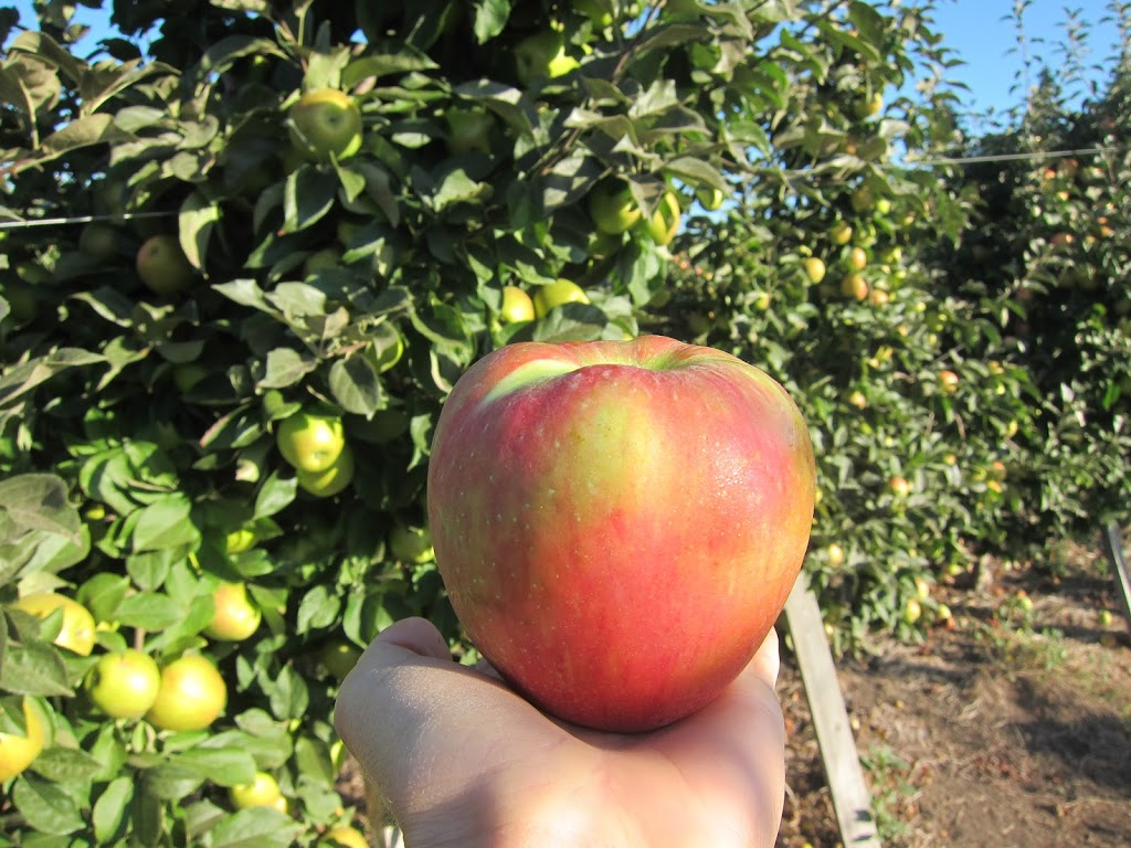 honeycrisp-9-4-12-002