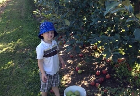 Silas can reach as many apples as he can carry!