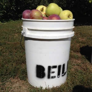applebucket.jpg