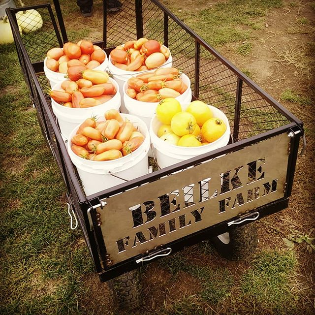 With the early frost our tomatoes are starting to wind down. We have lowered the cost of U-pick tomatoes to 50 cents per pound! With some hunting a lot can still be found!  Happy hunting! OPEN: Mon-Sat: 8a.m.-6p.m. Sunday: 11a.m.-6p.m. BEILKEFAMILYFARM.COM 4925 Rockdale ST NE, Brooks, OR 97305 #upicktomatoes #wvupick #upick #oregonupick #brooksoregon