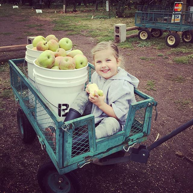 It's National Apple Picking Day!  Come join us! BEILKEFAMILYFARM.COM  4925 Rockdale ST NE, Brooks  OPEN: MON-SAT 8a.m.-6p.m. SUNDAY 11a.m.-6p.m.  #nationalapplepickingday #upickapples #upick #wvupick #applepicking