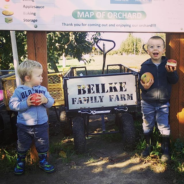 Even our youngest customers are finding some huge apples! Contest goes until the 15th so plenty of time to find the winning apple!  HOURS:  MON-SAT 8a.m.-6p.m. SUNDAY 11A.M.-6p.m.  4925 Rockdale ST NE, Brooks, OR 97303  BEILKEFAMILYFARM.COM  #threefreebuckets #contest #giveaway #upickapples #applepicking #wvupick