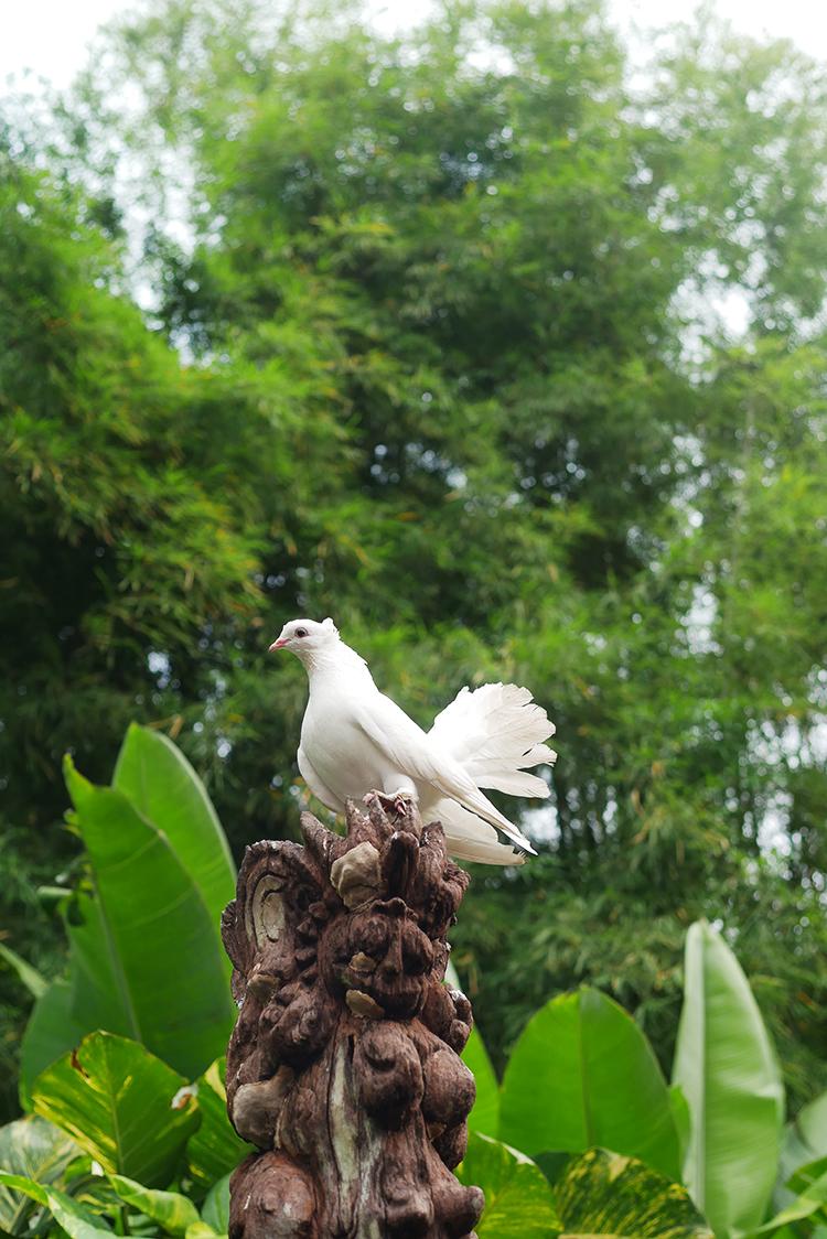 Plataran_Dharmawangsa.jpg