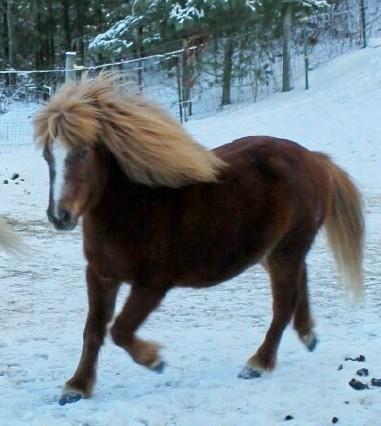 Rescue horse-RomeoSnow12-2013.jpg
