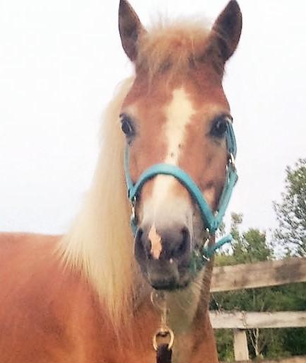 Rescue horse-PiperHd8-2015.jpg