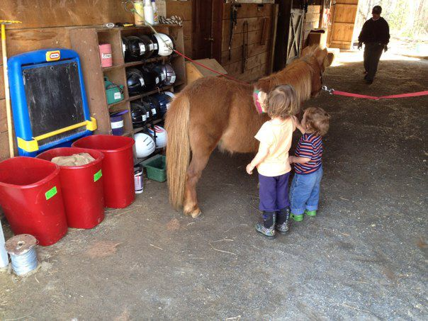 Rescue+HorseRH-GingerToddlers.jpg