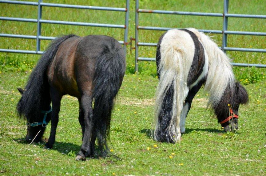 Rescue+HorseRH-MagicCeeCeebutts.jpg