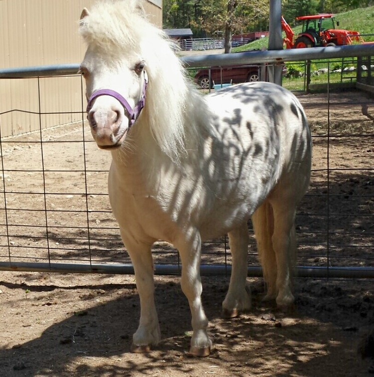 Rescue+HorseRH-Echo.jpg