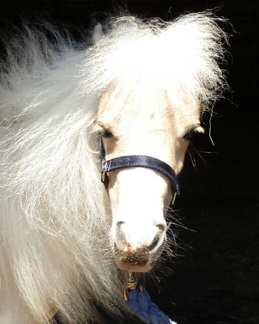 Rescue+horseRH-Sassy.jpg