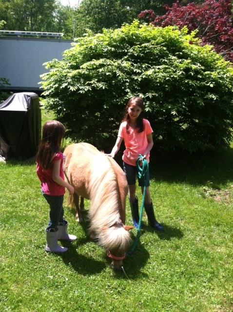 Rescue horseRH-MollyA.JPG