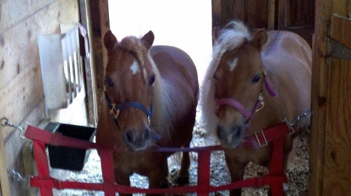 Rescue horseRH-WhiskeyMolly.JPG