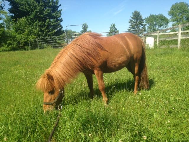 Rescue horse-Fritz.JPG