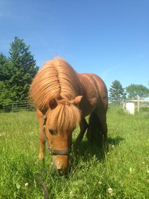 Rescue Horse-Fritz2.JPG