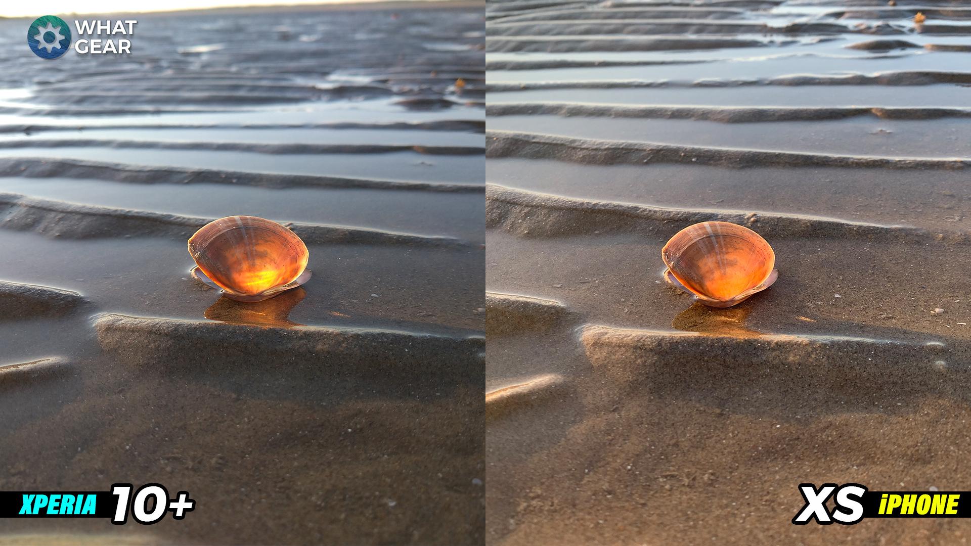 colour shell.jpg