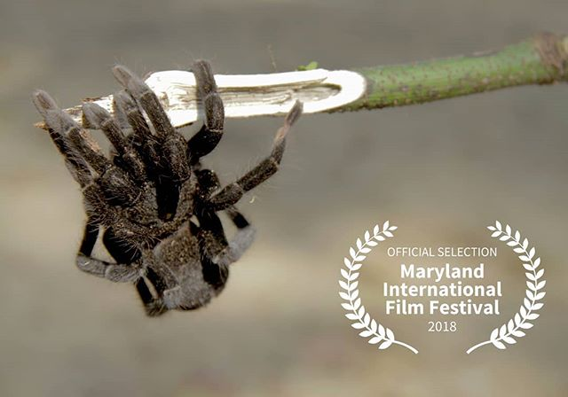 Saturday, April 28th at noon we are screening at the @marylandiff ! Director @sensen.something will be there for a Q&A. If you know a Marylander or two spread the word!  For more info visit our website, link in the bio . 📷: @colinsytsma . . . . . #documentary #film #maryland #hagerstown #panama #water #marylandiff #filmfest #filmfestival #conservation #catholic #masstomtn