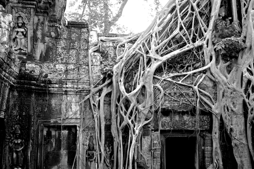Overgrown, re-discovered temple in Siem Reap, Cambodia.