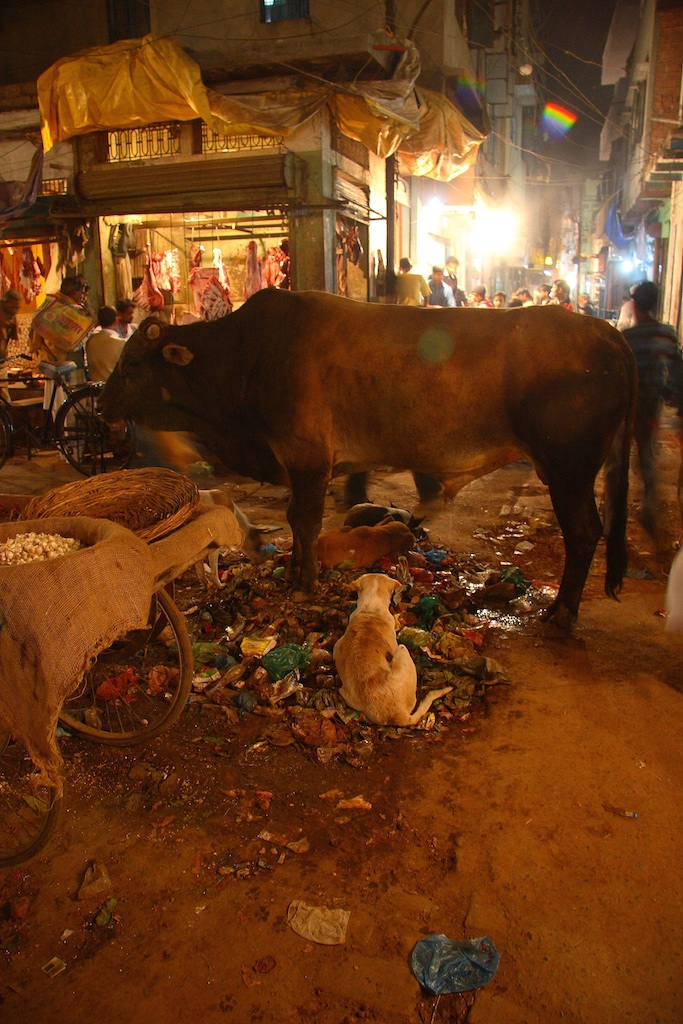 Street scene with holy cow. Varanasi, India.