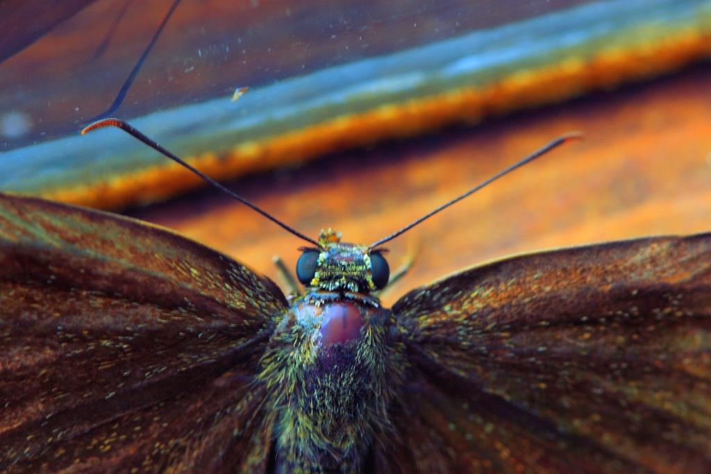 A moth-ful.