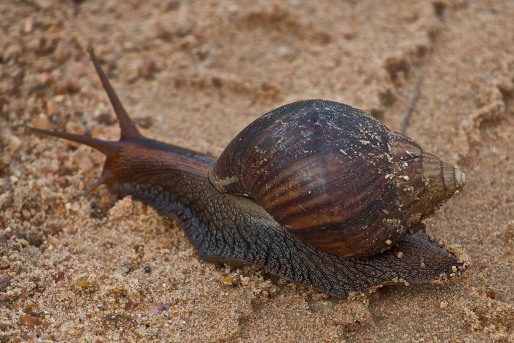 Speed hampered by wet sand.