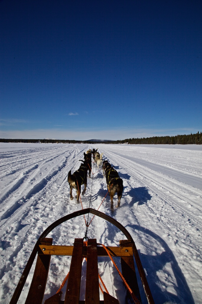 Dog-sledding north of the Arctic Circle. Jukkasjärvi, Sweden.