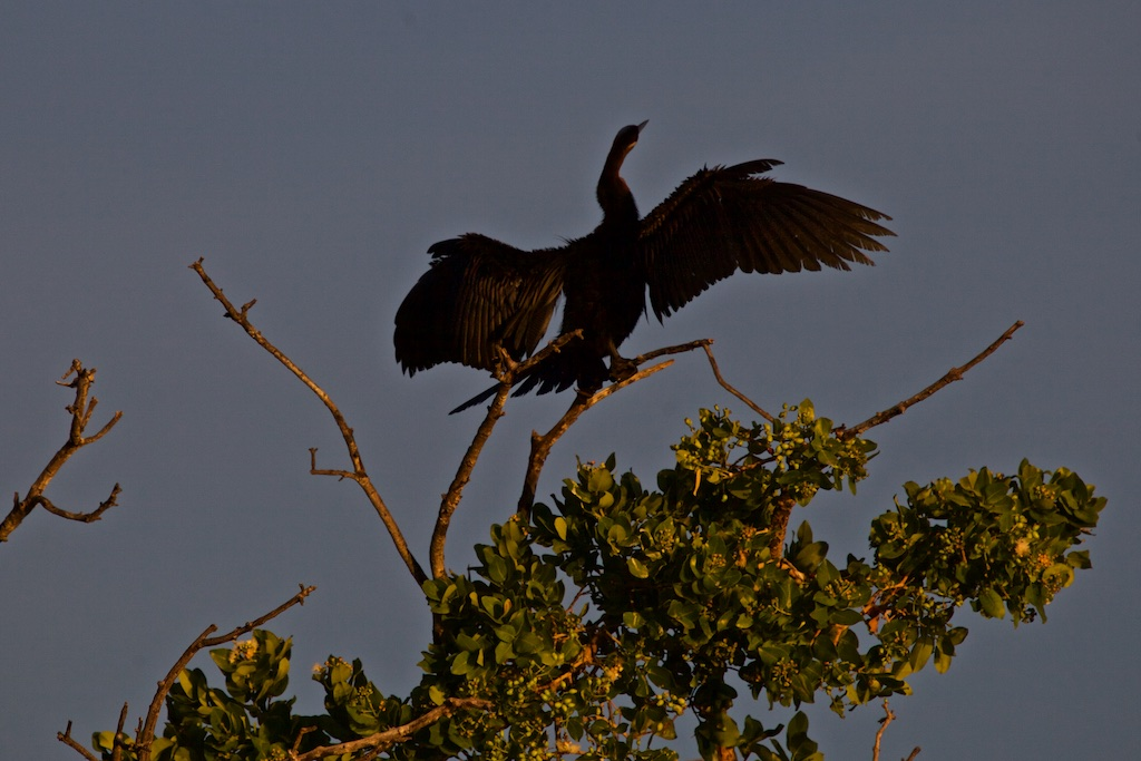 Drying the wings in the waning late afternoon heat