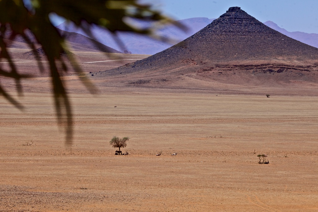 Animals looking for shade in the Namib Desert, Namibia