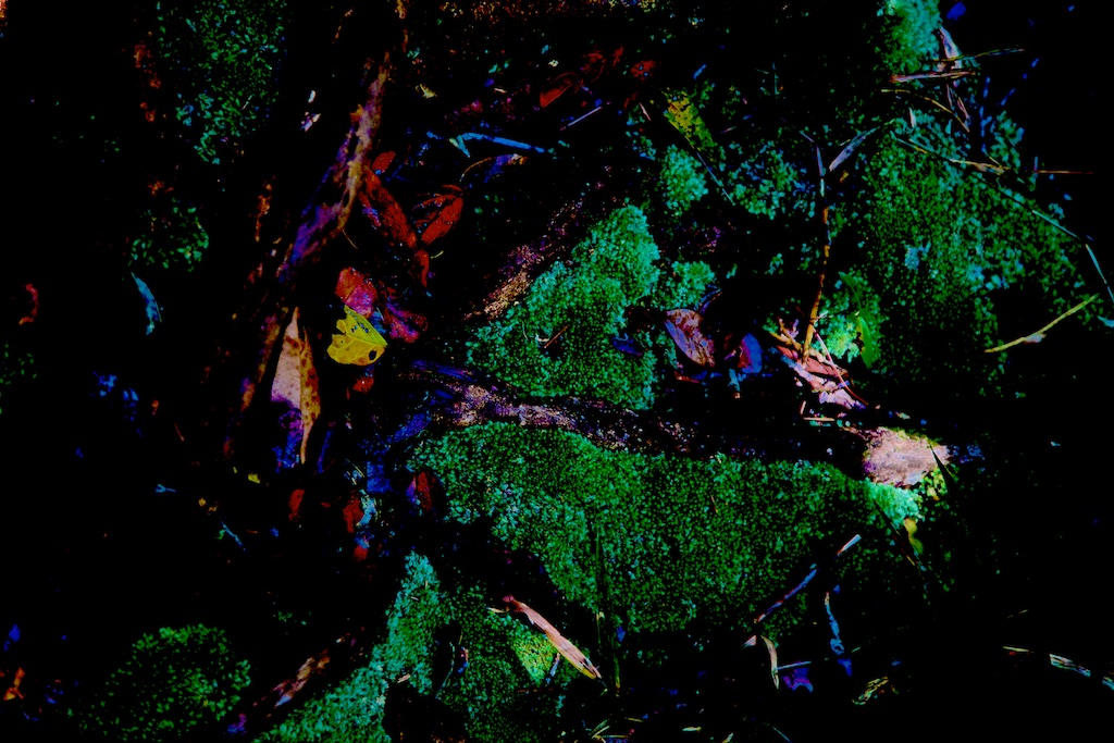 Moss feeding on precious stones.