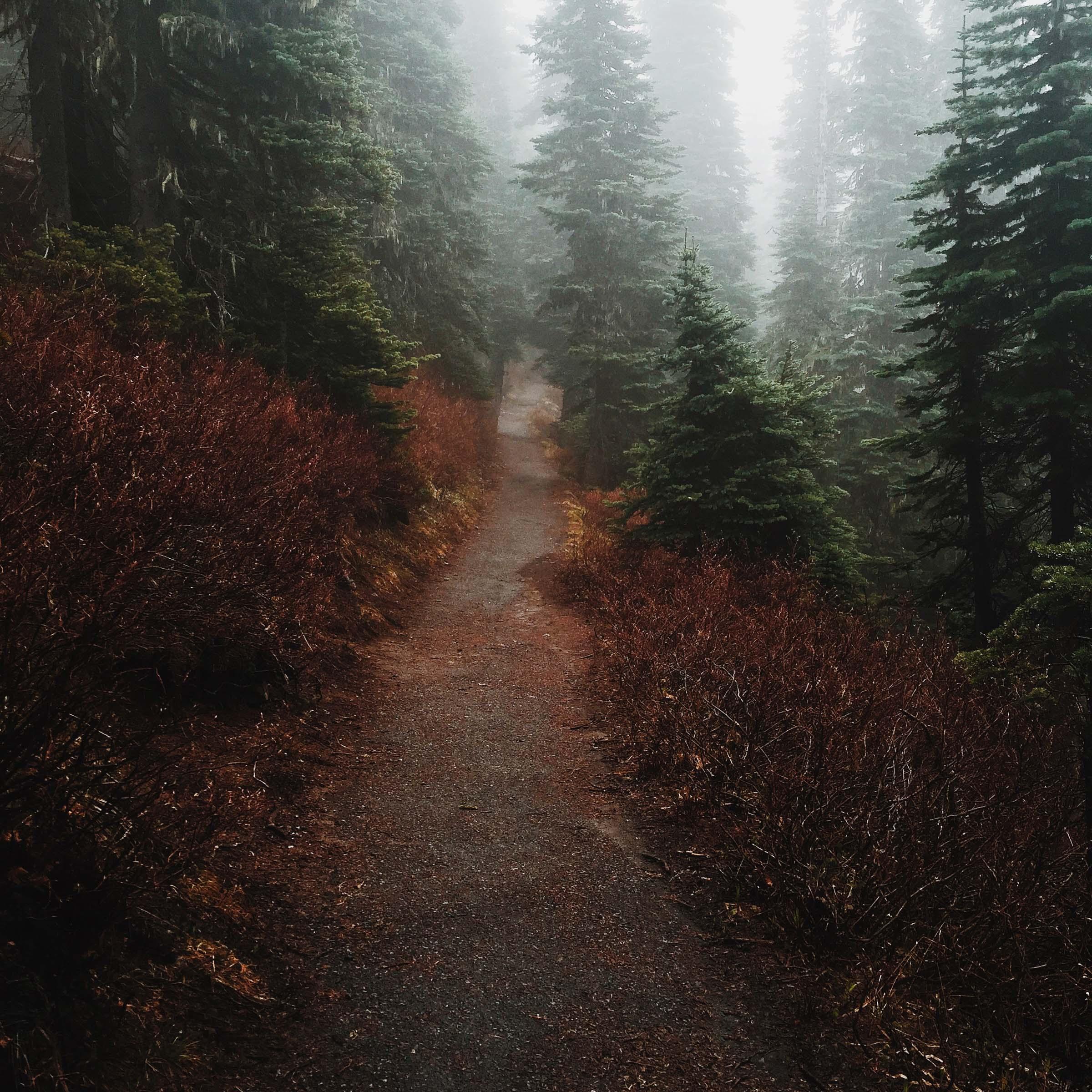 Mount Rainier National Park | Katch Silva
