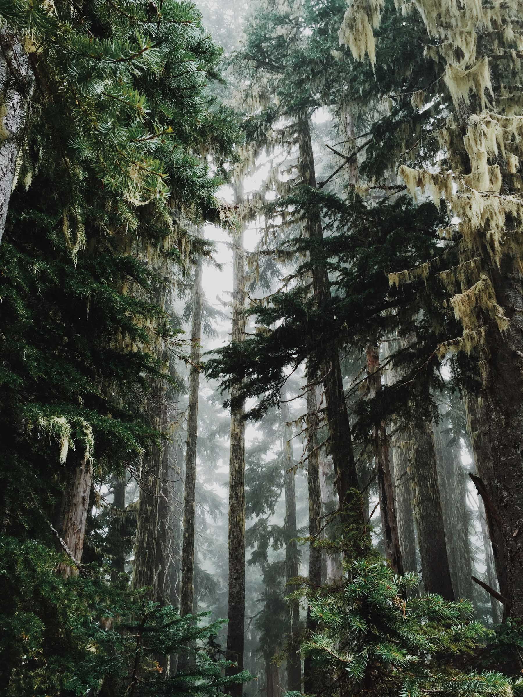 Outdoor adventure in Olympic National Park | Katch Silva