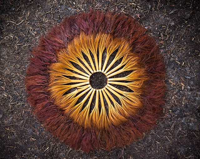 """Lion's Mane"" Deerfield Beach, FL 