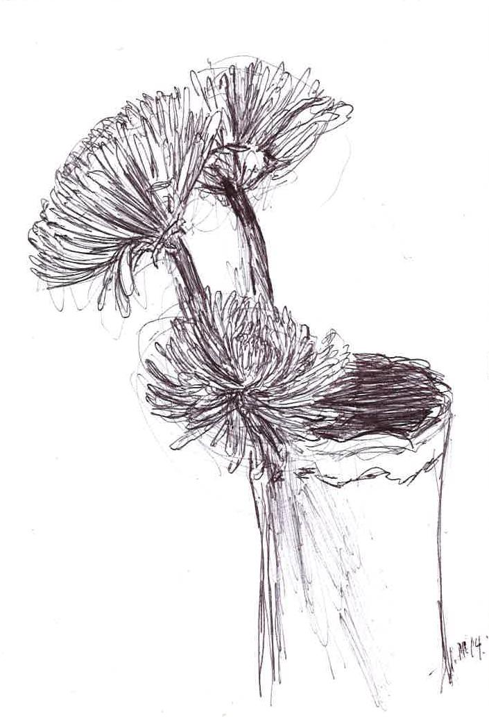 "Flowers   January   Pen on paper   4""x6"""
