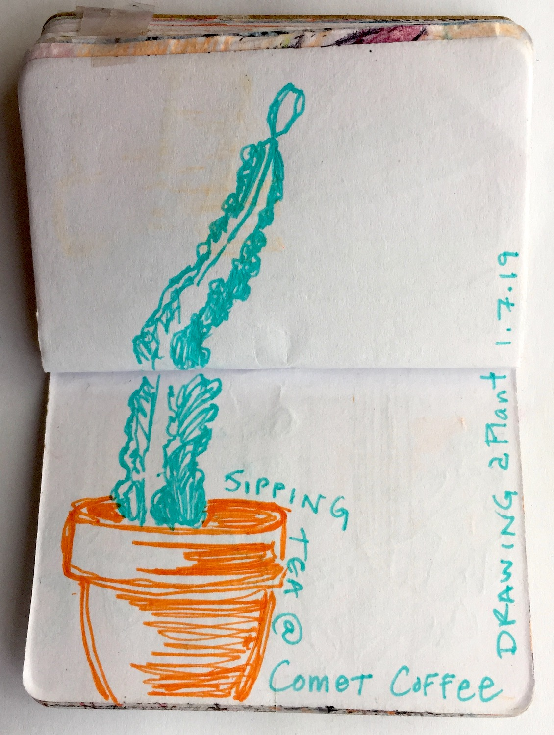 """Comet Coffee Plant  January 2019 Pen on paper 2.33""""x3.32"""""""
