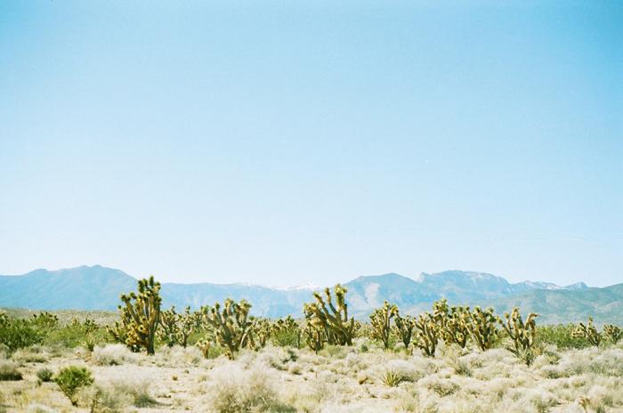 gaby j desert 3
