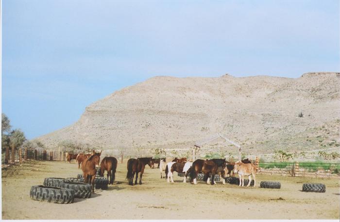 exploring the nevada desert gaby j photography_01