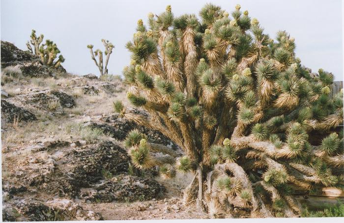 exploring the nevada desert gaby j photography_05