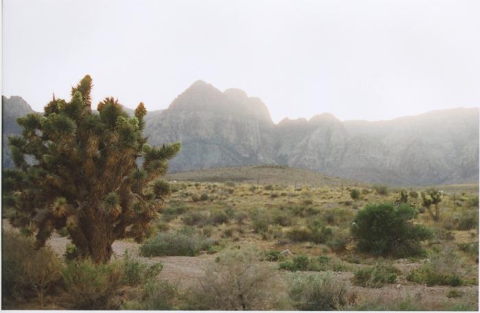 exploring the nevada desert gaby j photography_14