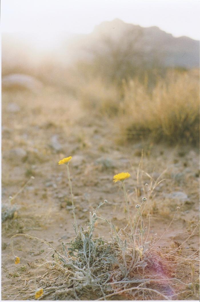 exploring the nevada desert gaby j photography_17