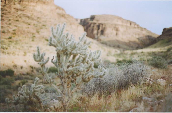 exploring the nevada desert gaby j photography_21