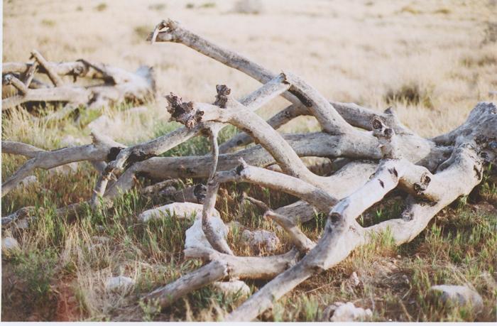 exploring the nevada desert gaby j photography_22