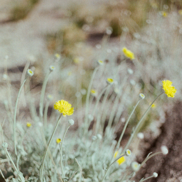 gaby j photography valley of fire15