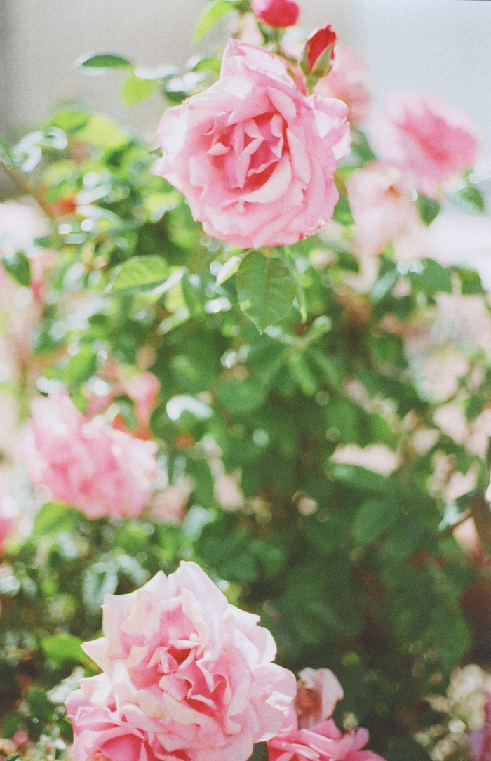 flowers gaby j 2
