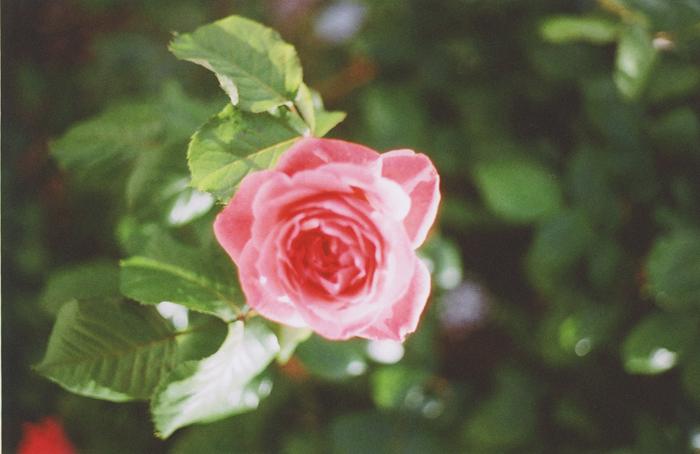 flowers gaby j 4