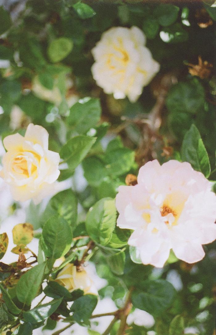 flowers gaby j 7